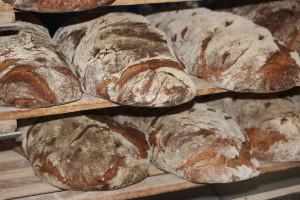 Ukraina: piekarze proszą władze o ograniczenie eksportu produktów zbożowych