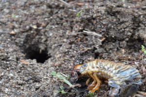 Jak sprawdzić czy są szkodniki w glebie?