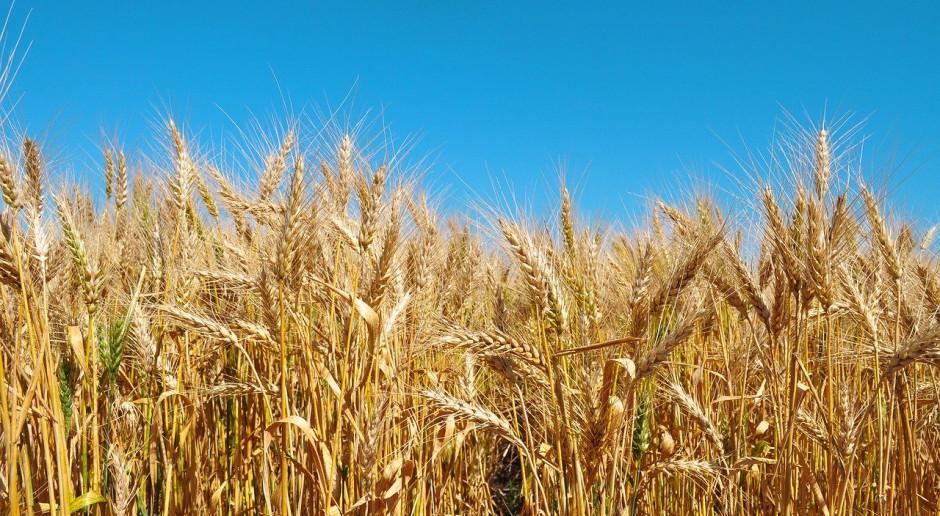Kazachstan wprowadzi ograniczenia w eksporcie pszenicy i mąki pszennej