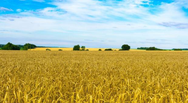 Parlament Ukrainy przegłosował ustawę o otwarciu rynku ziemi
