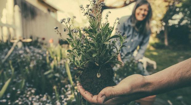 Brak pracowników uderzy w ogrodnictwo, zwłaszcza w krajach Europy Zachodniej