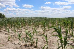 KRIR domaga się zmian w sposobie szacowania strat pogodowych