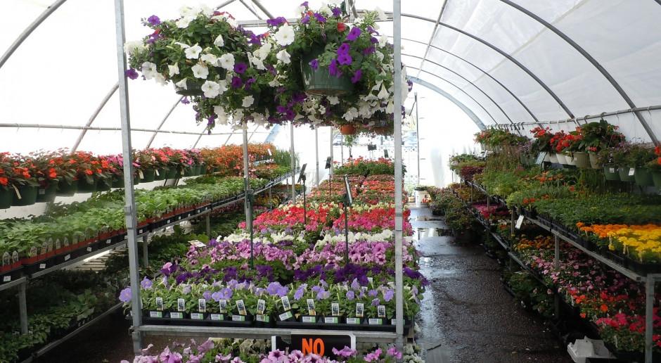 Producenci roślin ozdobnych nie ustają w boju