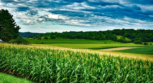 USA: Ogromna planowana powierzchnia uprawy kukurydzy
