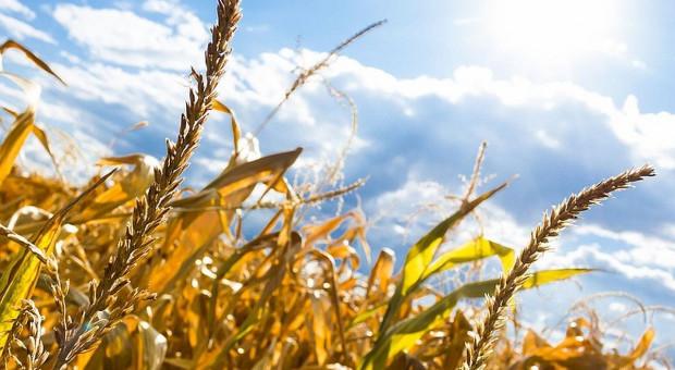 Co z udoskonaleniem monitoringu suszy rolniczej o dane z satelity?