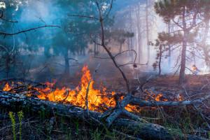 Finlandia: Spłonęło 250 ha lasu