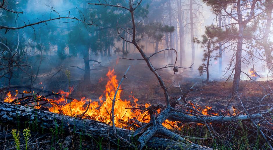 Pożar lasu w Paterku koło Nakła n. Notecią