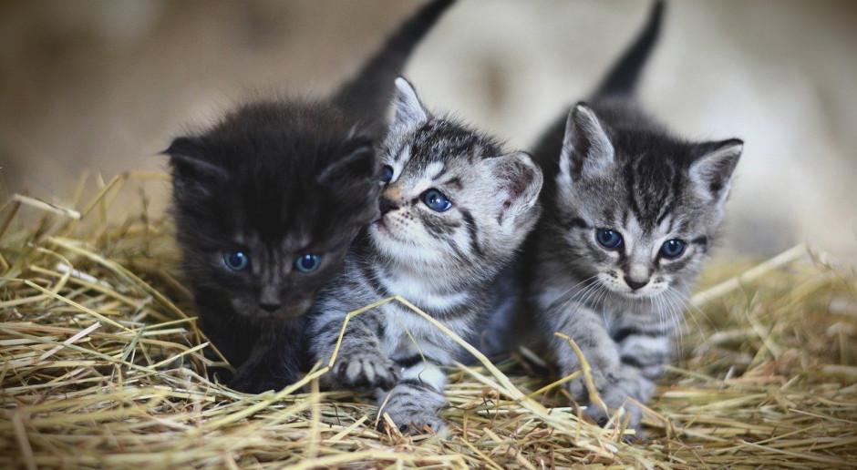 Koty nie są w stanie zarażać ludzi koronawirusem