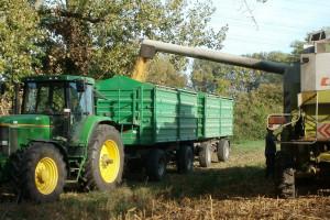 Ukraina: Nowa prognoza zbiorów i eksportu zbóż w sezonie 2020/2021
