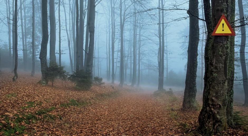 PZŁ do myśliwych: las poczeka, ale róbmy swoje