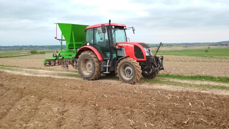 W przypadku pszenicy nawóz wysiewany jest za pomocą grubera na głębokość do 30-35 cm.