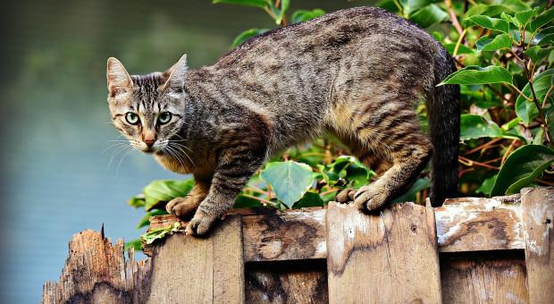 Indie. Miłośnik kotów wywalczył przepustkę podczas kwarantanny