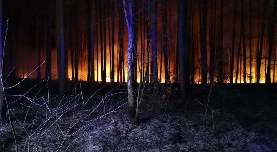 Palił się las pod Gorzowem Wielkopolskim