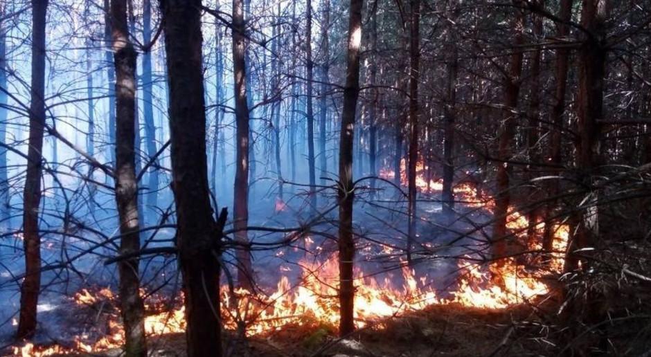 Najwyższy stopień zagrożenia pożarowego w lasach. Uważajmy podczas spacerów