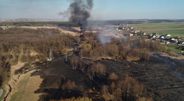 Groźny pożar chronionych łąk i torfowisk