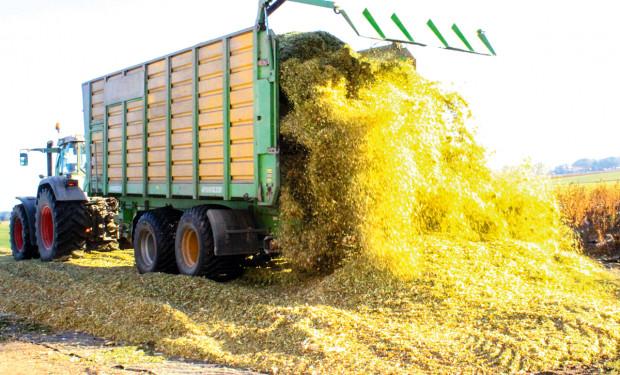 Nawożenie przedwschodowe kukurydzy na kiszonkę