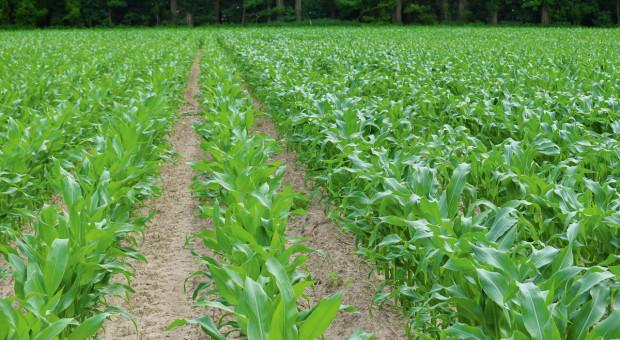 Herbicyd doglebowy zRSM
