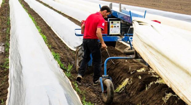Niemcy walczą o pracowników sezonowych w rolnictwie
