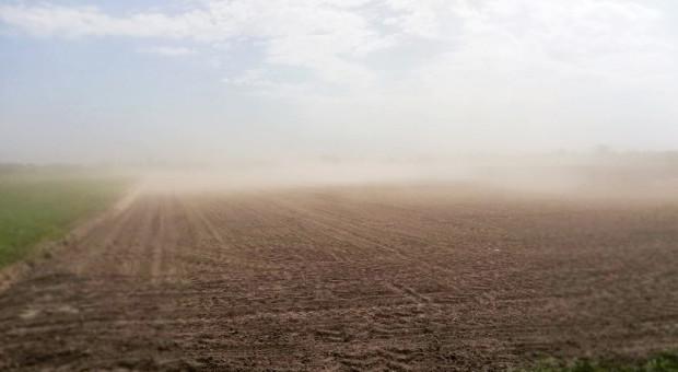 Wiatr coraz groźniejszy na polach