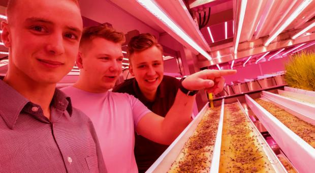 Rolnictwo wertykalne rolnictwem przyszłości?