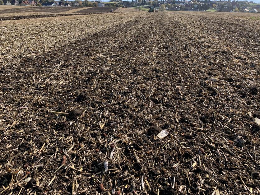 Ultrapłytka podorywka w stanowisku po kukurydzy uprawianej na ziarno.