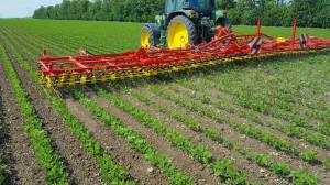 Część rolników świadomie idobrowolnie zrezygnowała zużywania chemii na swoich polach ipostanowiła walczyć zchwastami za pomocą starych, sprawdzonych przez lata metod