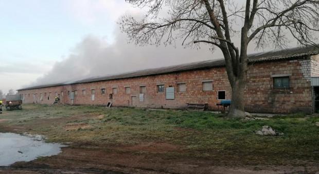 Pożar na fermie drobiu, zginęło kilkadziesiąt tysięcy kurcząt