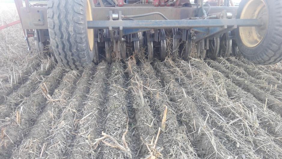 Stosowana technologia znacząco ograniczyła presję chwastów na polu. Wiosną w no-tillu zasiano groch, łubin oraz jęczmień jary.