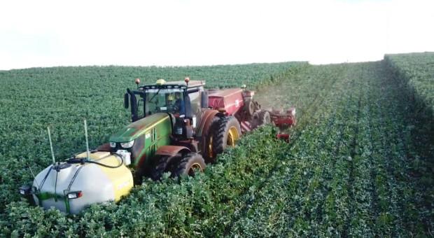 Green Tillage - sposób na ochronę gleby i wiązanie azotu