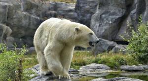 ZOO rozważa ubój zwierząt - posłużą za karmę dla pozostałych