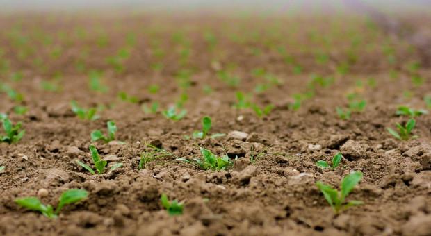 Białoruscy rolnicy zasiali zboża jare i rośliny bobowate na ponad 700 tys. ha