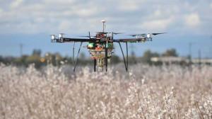 Dzięki zastosowaniu specjalnych dronów zapylających można uzyskać wyższe zbiory od 25% do nawet 60%. Foto. Dropcopter