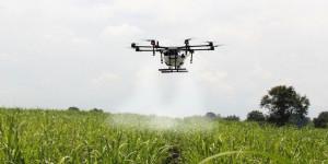 Specjalne drony są w stanie zapylać uprawy podczas niskich temperatur, w nocy i przy słabej aktywności pszczół. Foto. Dropcopter