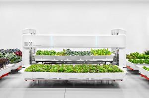 Eksperci z start upu zaprojektowali nowoczesny system uprawy, który zużywa mniej energii niż inne nowoczesne technologie hodowli upraw. System upraw hydroponicznych zużywa o 90% mniej wody w porównaniu z tradycyjnym rolnictwem, jednocześnie pozwala hodować  30 razy więcej roślin na 1 akrze ziemi. Foto. Iron Ox