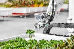 Kalifornijski start up Iron Ox niedawno rozpoczął sprzedaż pierwszych warzyw powstałych głownie w wyniku pracy maszyn i robotów. Foto. Iron Ox
