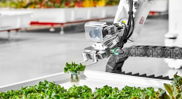 Czy agroboty zrewolucjonizują produkcję rolną?