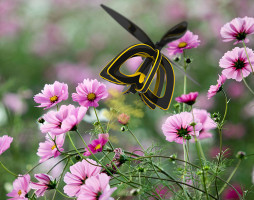 Celem start upu Plan Bee jest zapewnienie precyzyjnej usługi zapylania upraw przy użyciu najnowszej technologii UAV. Foto. Plan Bee