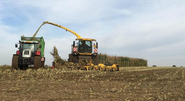 Ukraina: Eksport kukurydzy z rekordowych zbiorów w 2019 r.