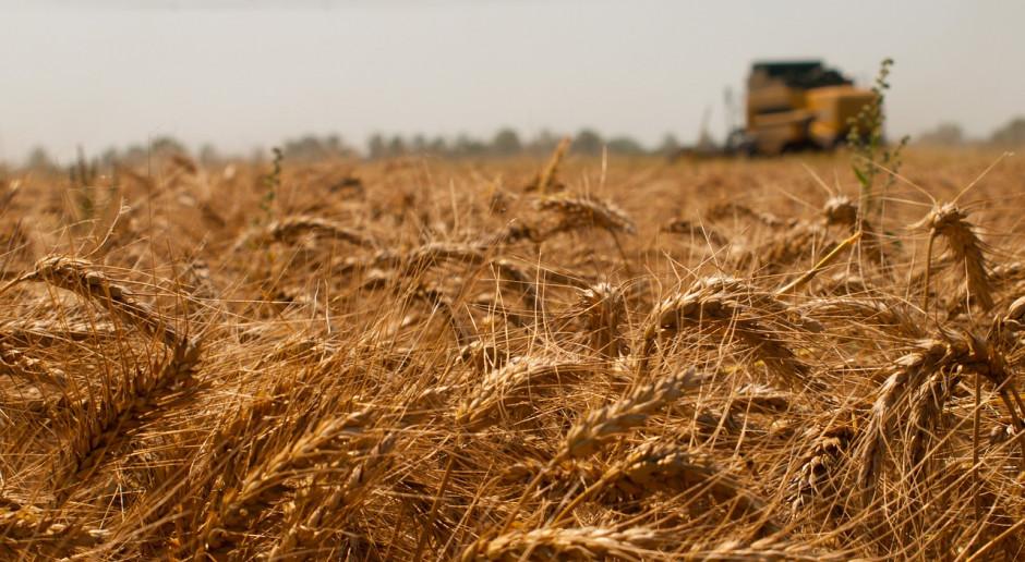 DRV: Deszcz zadecyduje o nowych zbiorach zbóż w Niemczech