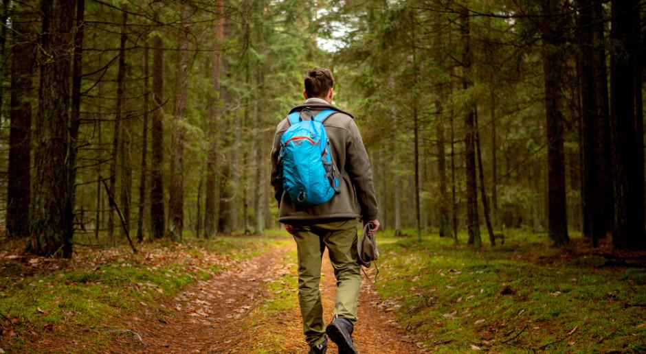 Nadleśnictwo Srokowo udostępnia las w Wilczym Szańcu