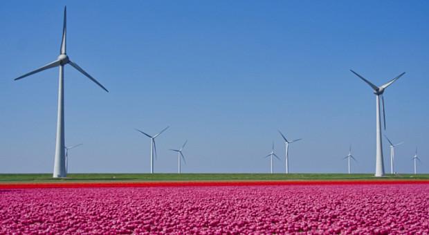 Niderlandy: Dodatkowe wsparcie na kwiaty i ziemniaki na frytki