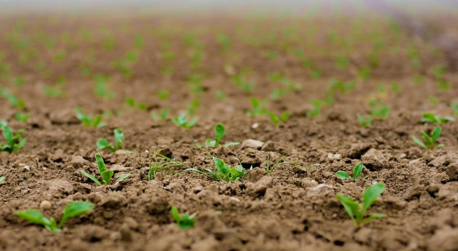 Zasiewy upraw jarych na Białorusi zaawansowane w prawie 90 proc.