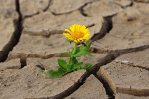 Na pomoc po suszy wciąż za mało o pół miliarda złotych?