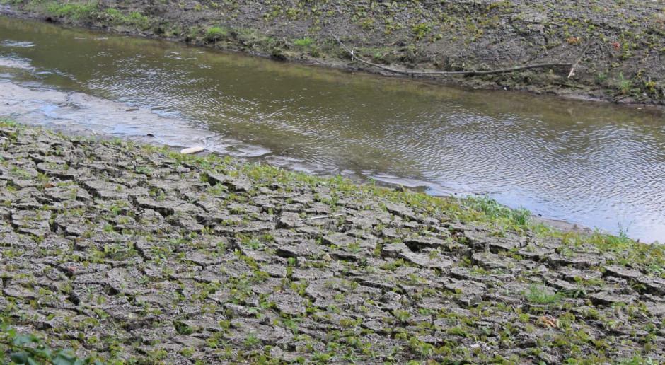 Woś: 70 proc. wody w Polsce zużywane jest na potrzeby energetyki