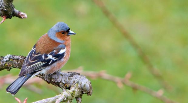 Podkarpackie: Wróciła większość migrujących ptaków; wiele rozpoczęło lęgi