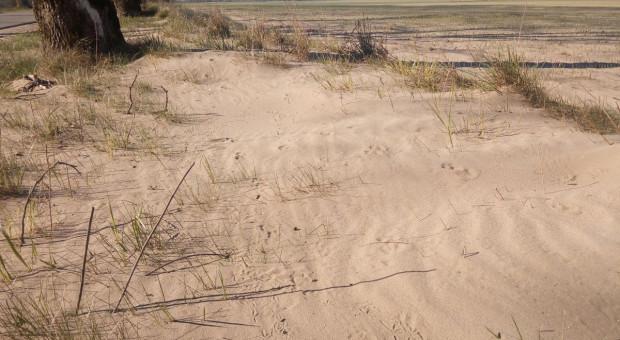 Erozja wietrzna, susza i mróz niszczą zboża