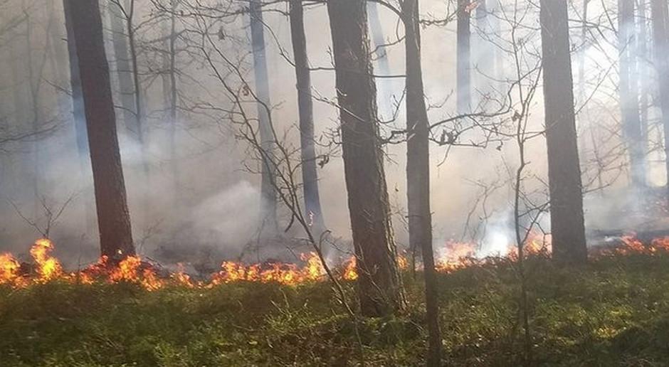 Bez powodu podpalał lasy i trawy
