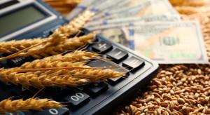Większa podaż ziarna w skupach, ceny pszenicy spadły