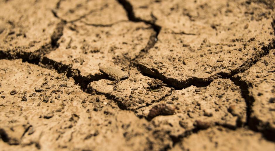 Analityk PKO BP: z powodu trzeciego z rzędu roku suszy, straty w zbiorach mogą być większe niż rok temu