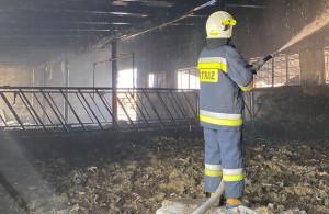 Obora spłonęła, ale strażakom udało się ewakuować bydło, Fot. OSP Krotoszyn